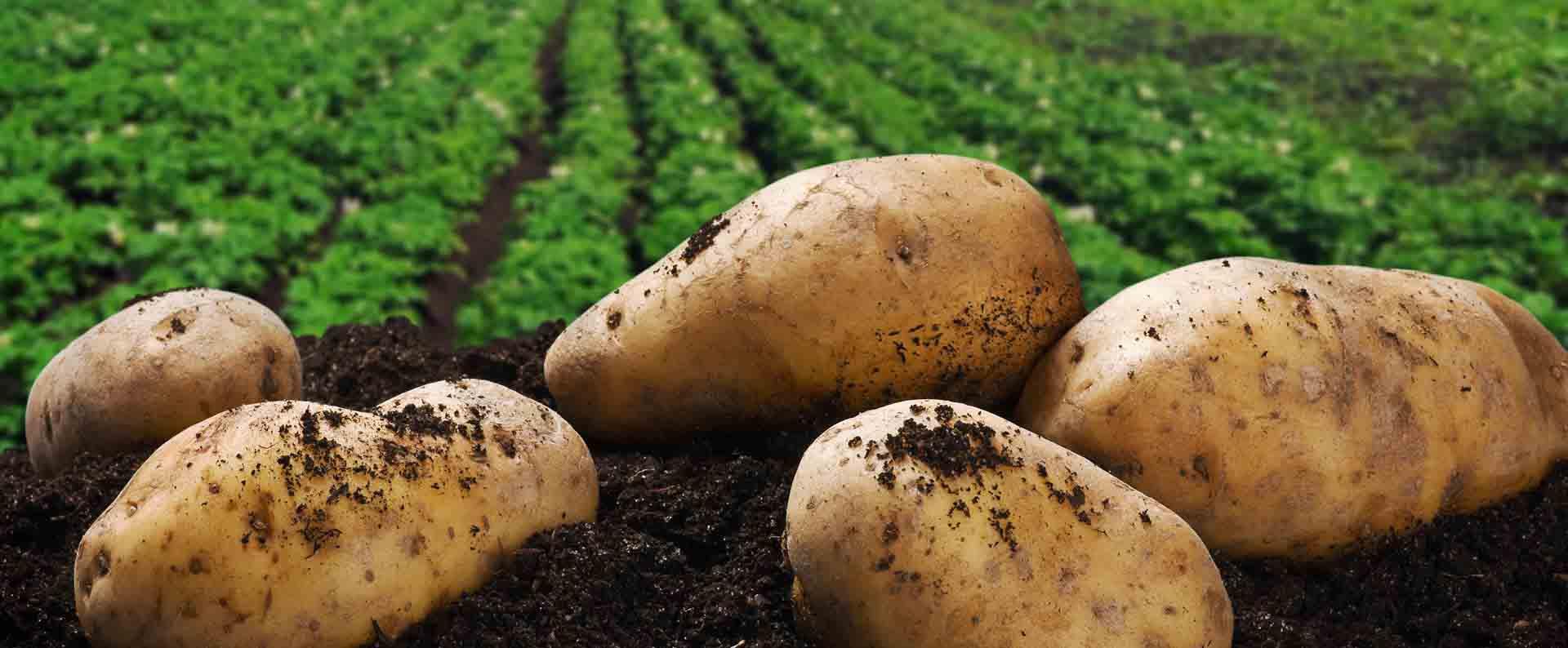 Farming Fertilizer