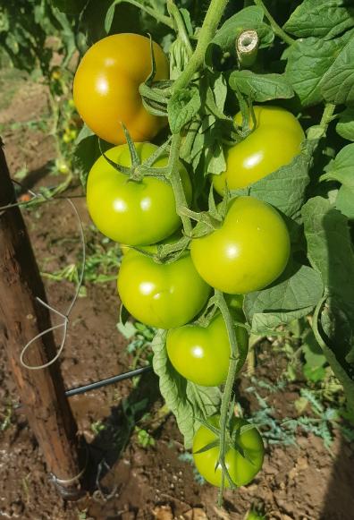 Plant Nutrition Services
